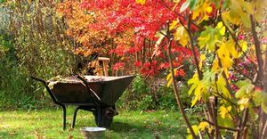 lead_autumn garden work scene with colorful leaves and wheelbarrow_6000_49